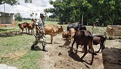 BSF returns Bangladeshi farmer four...