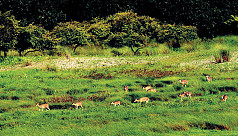 RAB declares Sundarbans pirate