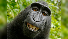 'Monkey selfie' photographer wins legal fight over iconic image