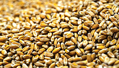 Government to import wheat from...