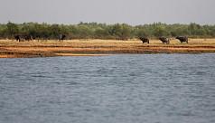 Experts: New islands could solve Bangladesh land crisis