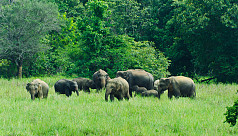 Myanmar army's landmines put elephants...
