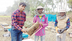 Honey from Kushtia being exported to...