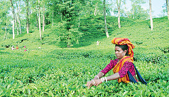 Seven decades of tea auction in...