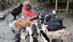 Meherpur women becoming solvent by rearing...