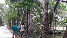 Four tourists held for hunting birds in Monpura Island