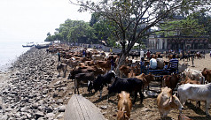Cattle import from Myanmar unfettered...
