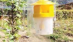 Pheromone trap method for pest control...