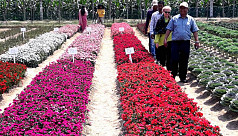 How exotic flower cultivation could...