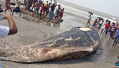 Dead whale found on Kuakata sea...