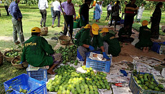 Satkhira mangoes to be exported to Europe...
