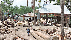 Illegal sawmills near forests in...