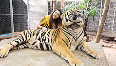 Mim makes a Tiger purr on Eid...
