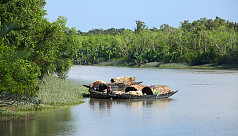 Drones to be used to monitor Sundarbans