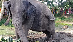 Child trampled by elephant in...