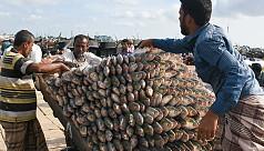 National fisheries week 2018: Ilish...