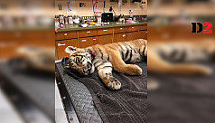 Tiger cub found stuffed in duffel bag...