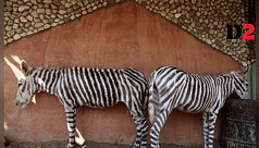 Egyptian zoo accused of passing off...