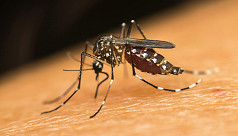 Number of dengue cases continue to...