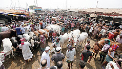 Eid-ul-Azha: Online cattle buying likely...