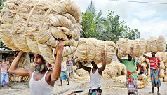 Tk1,000 crore govt jute fund draft policy...