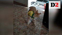 Cat shows Neymar's fake foul