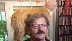 How to give an interview when the cat is sitting on your head