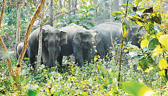 Wild elephants kill farmer in Jamalpur