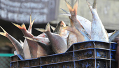 1,450 tons ilish to be exported to India for Durga Puja