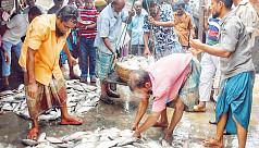 Ilish production up by nearly 160% in...