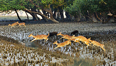 Sundarbans to reopen for tourists after 7 months