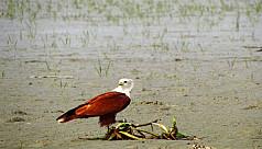 Fly on: Avian diversity