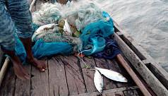 Jhalakathi fishermen ignore ban, catch...