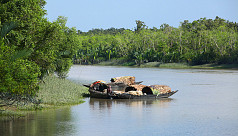 Fishing bans in Sundarbans render hundreds...