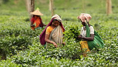 Sylhet tea workers go on work abstention amid Covid-19 fear