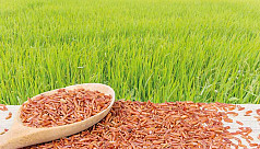 Bangladeshi rice research lags behind...