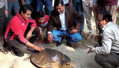 Endangered sea turtle rescued in...