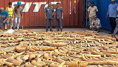 Cambodia seizes record 3-ton haul of...