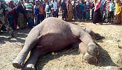 Indian elephant dies near Rowmari...