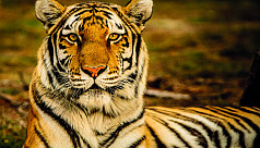 Fantastic beasts of Bengal and where to find them