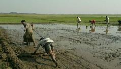 Water crisis hits irrigation in Sunamganj