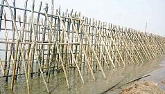 Bamboo walls: A Bangladeshi erosion-prevention...