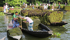 In pictures: Floating farming in the...