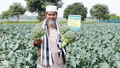 Broccoli farming gaining momentum in...