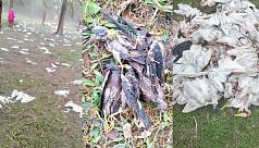 Storm kills 6,000 birds in eco