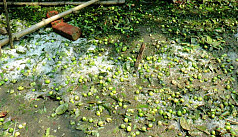 Hailstorm affects crops in Rajshahi,...
