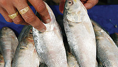 Two-month ilish ban begins