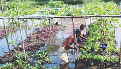 Floating vegetable farming gaining popularity...