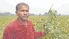 Dinajpur farmer bags country's 'Best...