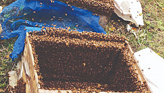 Farmers to collect honey worth Tk2 crore...